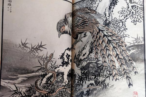 A Hawk from Kono Bairei, Book of 100 Birds