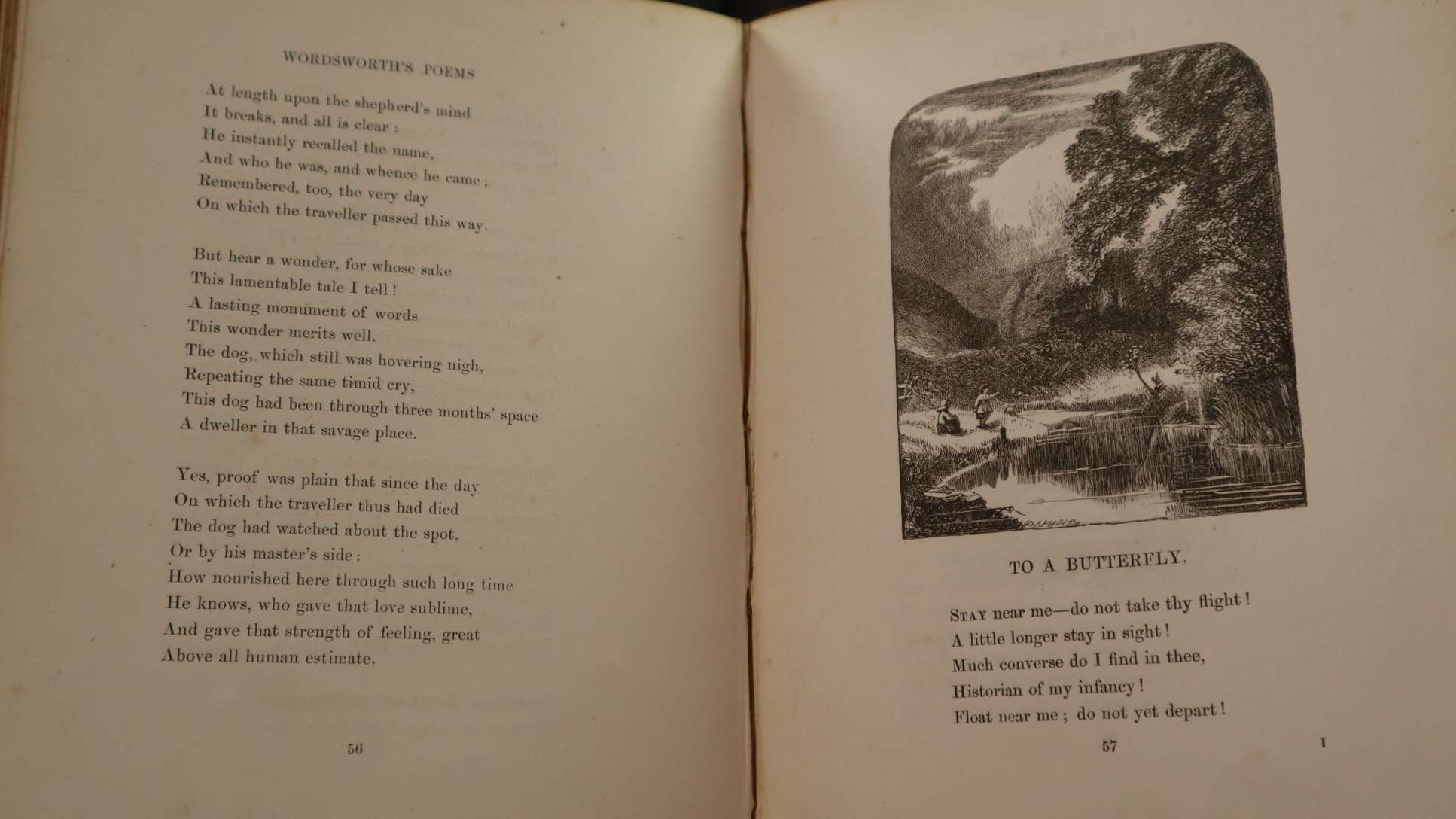 To a Butterfly by William Wordsworth