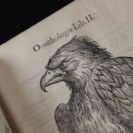 A woodcut from the section on eagles