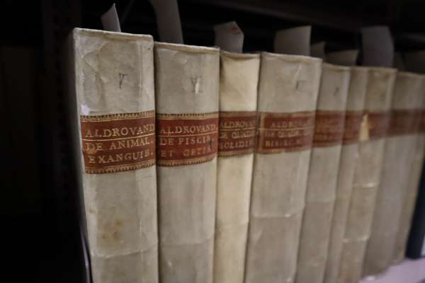 The 13 volumes of the Natural History