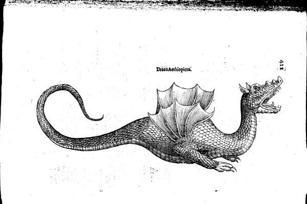 The dragon in Black and white