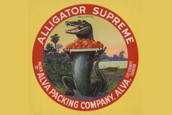 Alligator Supreme Citrus Label